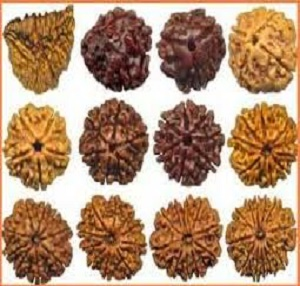 How To Test Rudraksha Is Original